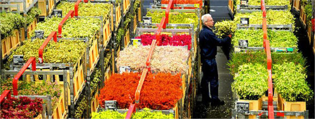 Dutch Flower Exports, World's Biggest, Slip 2.3% on Slow Economy.