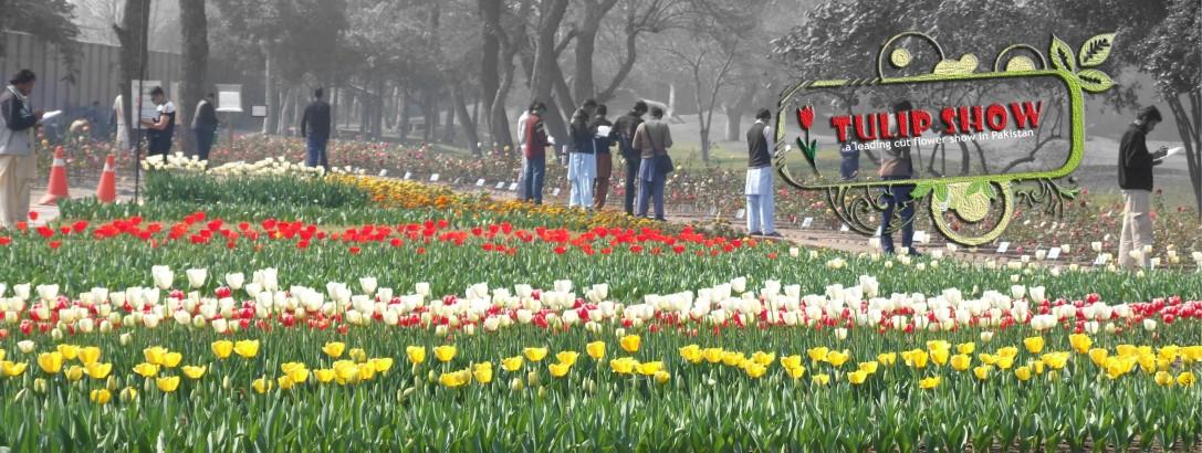 Breaking cut flowers myths in Pakistan
